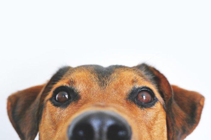 Conférence: psychologie canine
