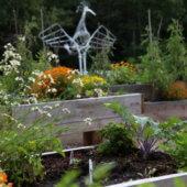 Soirée d'information et d'inscription au jardin collectif