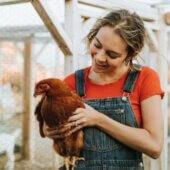 Conférence : des poules dans ma cour