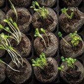 Conférence : démarrage et acclimatation des semis / culture intérieure